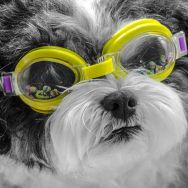 Olivia Beach Goggles