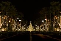 Town-Center-Christmas-Lights-2152